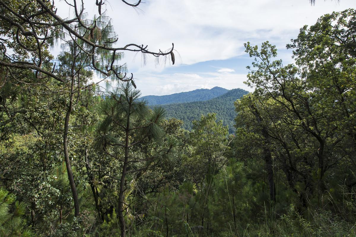 Sierra Mazati 16