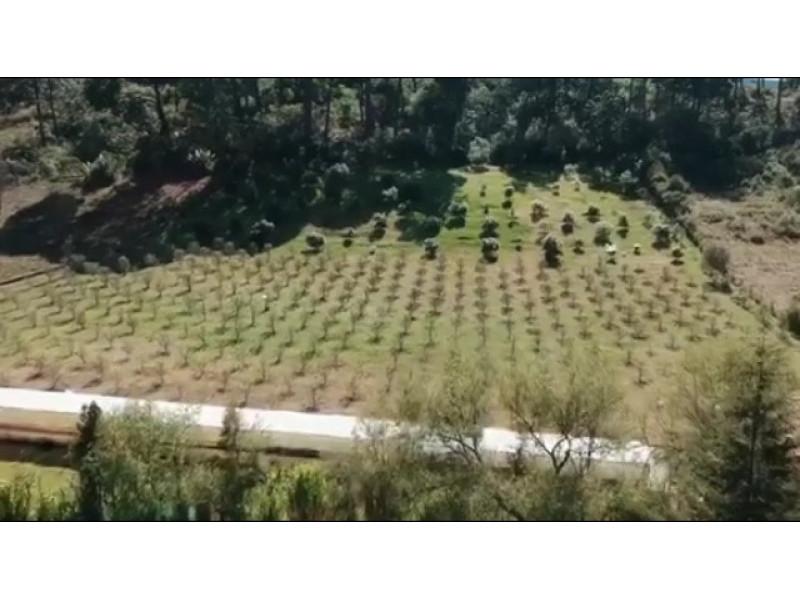 Mazamitla precioso pueblo mágico, uno de los sitios vacacionales de montaña mas visitados de Jalisco y estados vecinos. Excelente ubicación , sobre la carretera a unos metros del cruce de entrada a Mazamitla y a 3 min. del pueblo. ideal para cabañas vacacionales, la mitad del terreno está en cerro , esto ayuda al desarrollo del proyecto. Terreno  al fondo forma de trapecio (8,786.42 m2) y con un ingreso sobre carretera de 10.50 x 40 m.  Tiene huerta de aguacates, manzanos, higos. Un pequeño vivero y una bodega. Tiene una cisterna con capacidad de 12,500 lts.  22