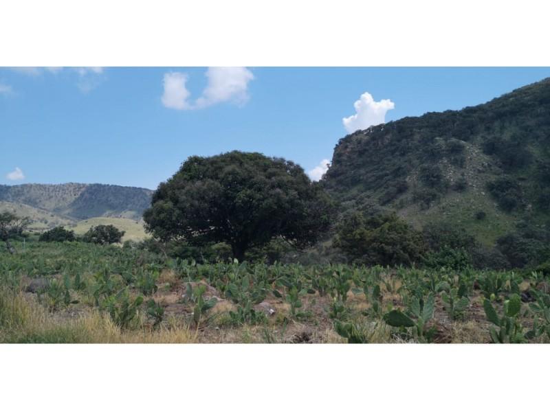 terreno esta actualmente sembrado  de nopales se encuentra en  san  esteban cerca de zapopan.   2
