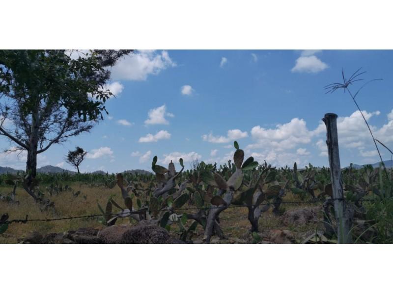 terreno esta actualmente sembrado  de nopales se encuentra en  san  esteban cerca de zapopan.   3